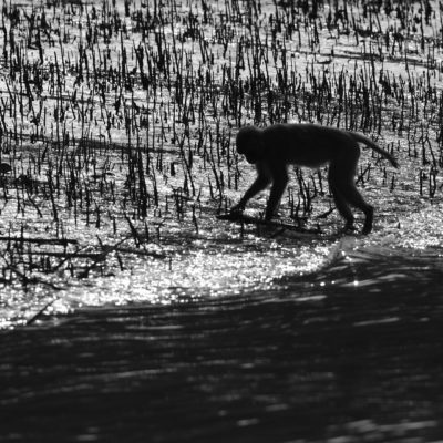 Place:: Sundarbans Tiger reserve,West bengal,India.