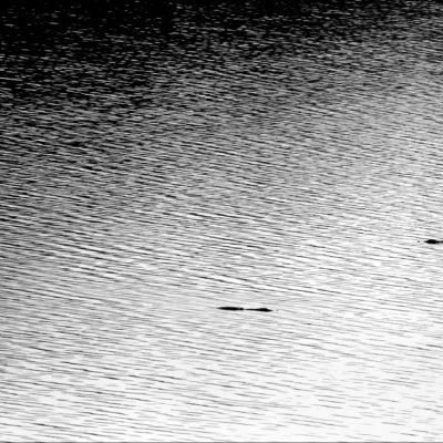 Species:: Crocodile...Place:: Kamleshwar Reservoir...Gir National Park, Gujarat