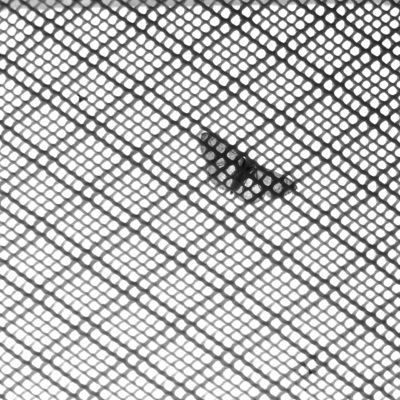 A moth resting on the insect net at a window in a washroom in velanadar national park made me to pick the camera & capture the scene where i liked the patterns created by the net & semi transperent moth sitting on it breaking it.